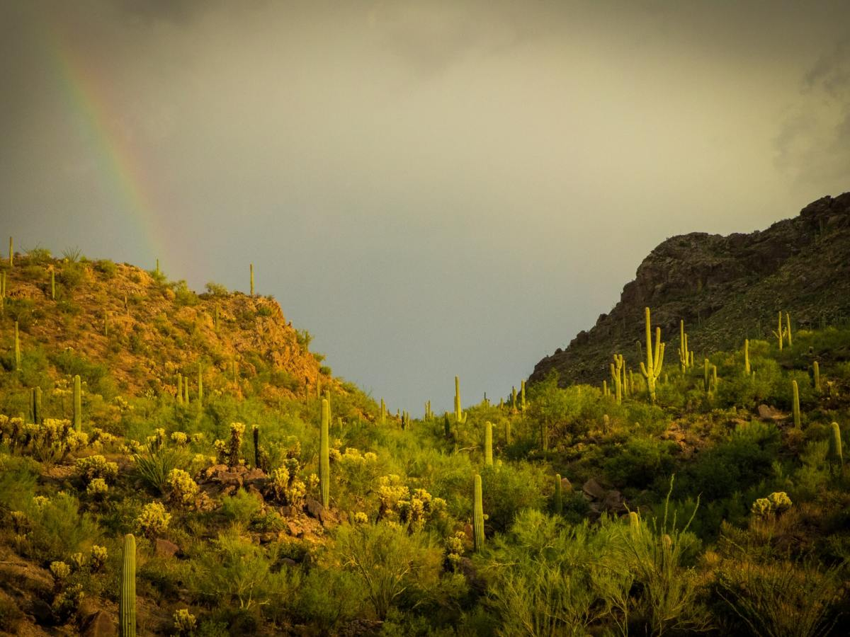 Gates Pass at Sunset, Tucson, field of cactus and desert plants